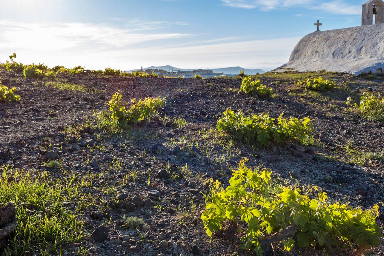 Aressana Special: The Vedema Of Santorini!