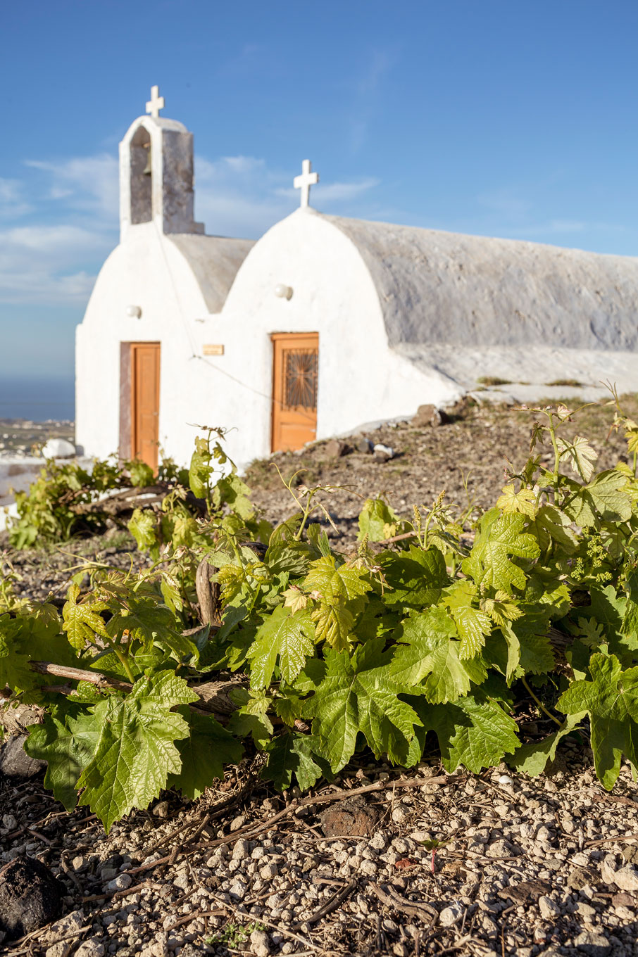 Santorini Insiders': A Introduction To Santorini Wine